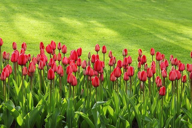 Gemähter Rasen mit Blumen